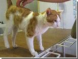 Одесского кота спасли от дворника-киллера
