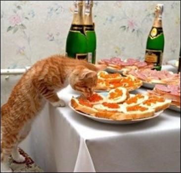 Коты, которые едят со стола, страдают душевным расстройством