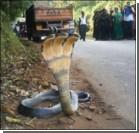 В Индии нашли трехглавую змею. Фото