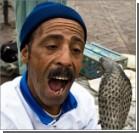 Непалец отомстил кобре - закусал ее до смерти