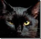 Кошка проносила заключенным наркотики