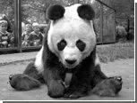 В Берлине умерла самая старая в мире панда