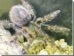 Выброшенному на помойку пауку подыщут новый дом