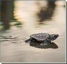 Землетрясение погубило тысячи яиц редких морских черепах