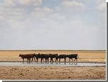 Страховщикам предсказали многомиллиардные убытки из-за засухи в США
