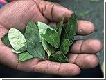 СМИ сравнили доходность производства какао-бобов и листьев коки