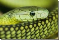 Создано лекарство от рака с использованием яда змей и скорпионов