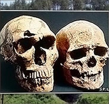Учениы восстановили геном древнего человека