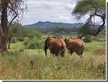 Биологи разобрались с инфразвуковым пением слонов