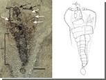 Палеонтологи обнаружили древнейшее крылатое насекомое