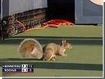 Во время матча US Open на корт выбежала белка
