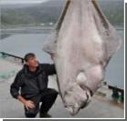 Рыбак из Германии выловил палтуса весом 232 кг. ФОТО
