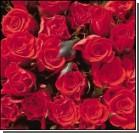 Розы улучшают память?