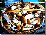 24 жителя севера Молдавии отравились грибами