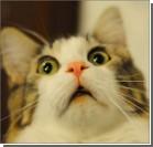 """Полиция Швеции арестовала """"жирного"""" кота за кражу еду"""