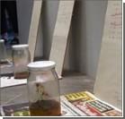 На выставке современного искусства украли банку дерьма