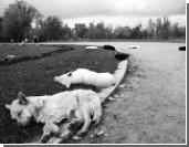 По факту отравления собак в московском парке завели дело