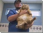 В американский приют для животных поступила 19-килограммовая кошка