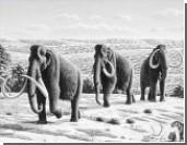 Семен Григорьев: Живые клетки мамонта ищут впервые