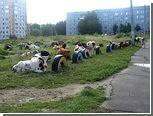 Полицейские пресекли предпринятую коровами попытку срыва школьной линейки