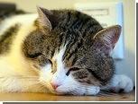 Кота Ларри уволили с поста главного британского крысолова