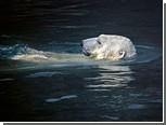 В зоопарке на Аляске проведут выборы президента
