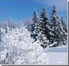 Зима 2013-го: метеорологи пообещали России необычно низкие температуры