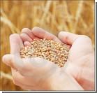 Из-за повышенного спроса в мире дорожает украинское зерно