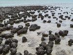 Палеобиологи прояснили метаболизм древнейших организмов