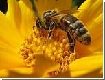 """Смена """"профессии"""" у пчел отразилась на их ДНК"""