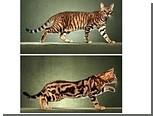 У кошек обнаружили ген пятнистости