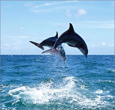 Ученые доказали, что дельфины - это разумная раса