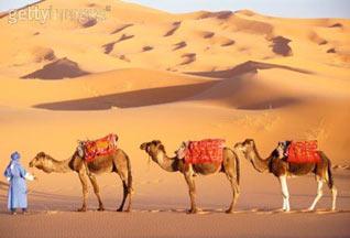 Перуанцы отравили подаренных марокканским королем верблюдов