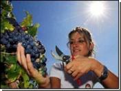 Борьба за мир в меню фестиваля еды в Турине