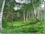 Путин не допустит передачу лесов в частную собственность