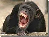 Соратники Януковича сравнили Тимошенко с обезьяной