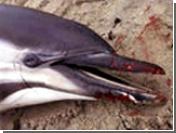 В Мозамбике произошло массовое самоубийство дельфинов