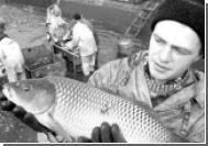 Россия ловит рыбу без труда