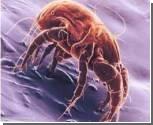 Фекалии домашних клещей разрушают защитные свойства кожи человека