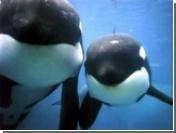 Ирландия нарушила запрет на ловлю китов