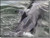 Исландия нарушила запрет на промысел китов
