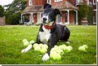 Самая одинокая собака Великобритании нашла хозяев