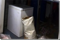 Американец нашел в купленном на аукционе морозильнике 40 мертвых кошек