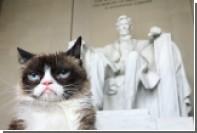 Сердитый котик посетил мюзикл «Кошки»