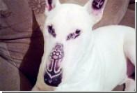 Сделавшего своему псу татуировки бразильца обвинили в жестокости