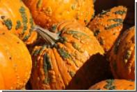 В Нью-Джерси перед Хеллоуином похитили около 200 тыкв