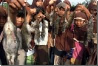 В столице Индонезии объявили массовую охоту на крыс