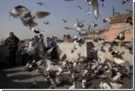 В Индии задержали 150 голубей по подозрению в шпионаже