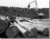 Украине придется принять «лесной ультиматум» Евросоюза
