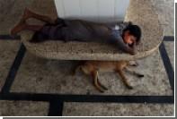 Названа причина дружбы собаки с человеком